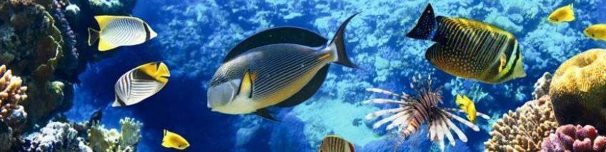 Bonaire Vissen