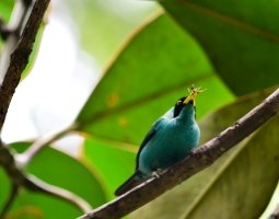 dagtocht vogels spotten.jpg