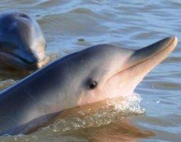 dagtocht dolfijnen spotten.jpg
