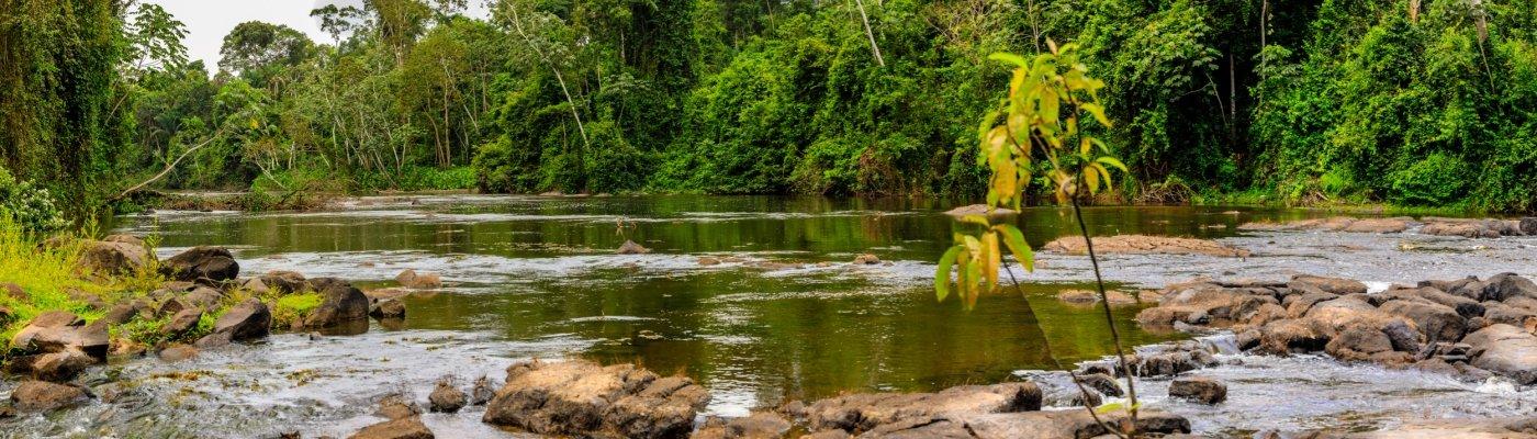 Suriname, Jungle