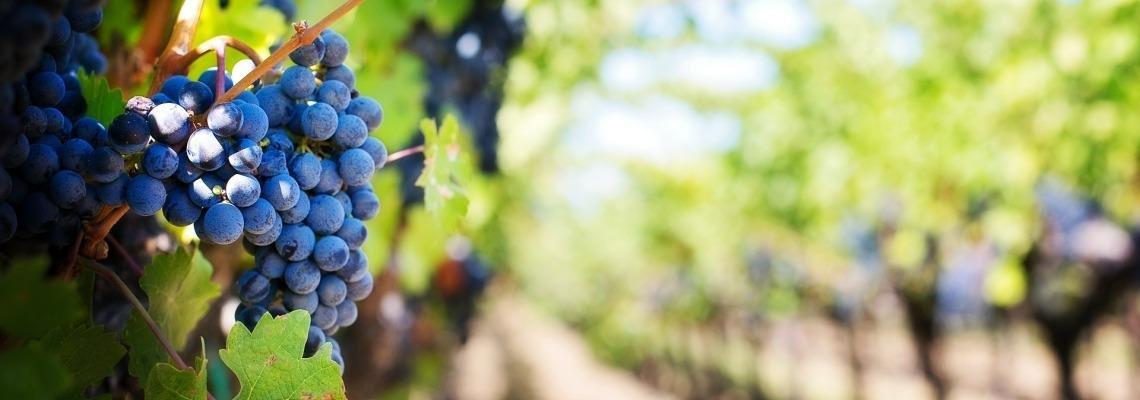 van der valk spanje costa brava wijngaard barcarola wijn bodega arrangement