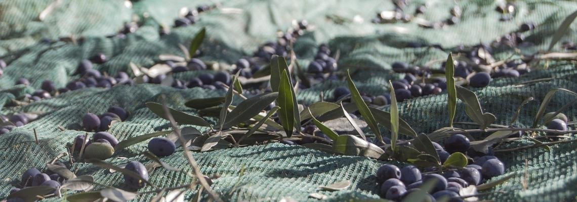 van der valk spanje costa brava olijven barcarola wijn bodega arrangement